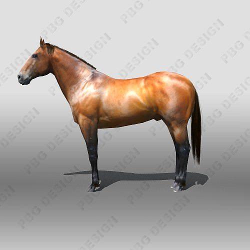 horse 3d model rigged max obj mtl 3ds fbx tga 1
