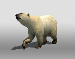 polar bear 3d model low-poly rigged max obj 3ds fbx