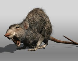 3d asset rigged rat animal low-poly
