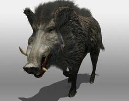 wild boar animated 3d