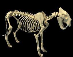 Lion Skeleton 3D Model