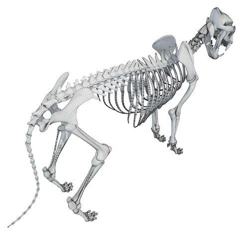 Lion Skeleton