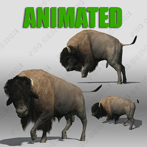 buffalo 3d model low-poly rigged animated max obj 3ds fbx stl dae 1
