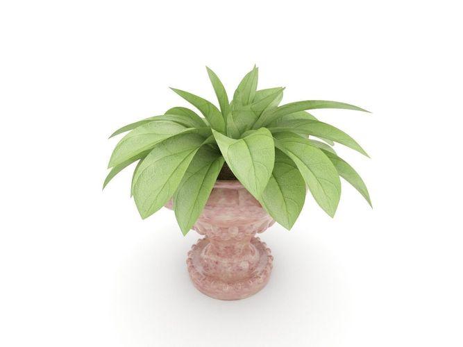 Plant in a vase3D model