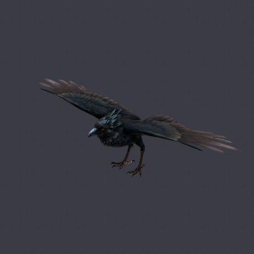 Crow bird3D model
