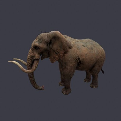 Elephant3D model
