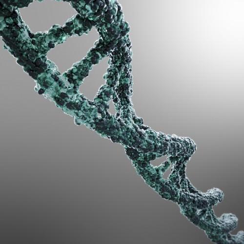 DNA strand3D model