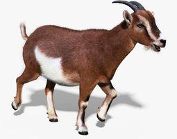Domestic Goat FUR RIGGED 3D Model