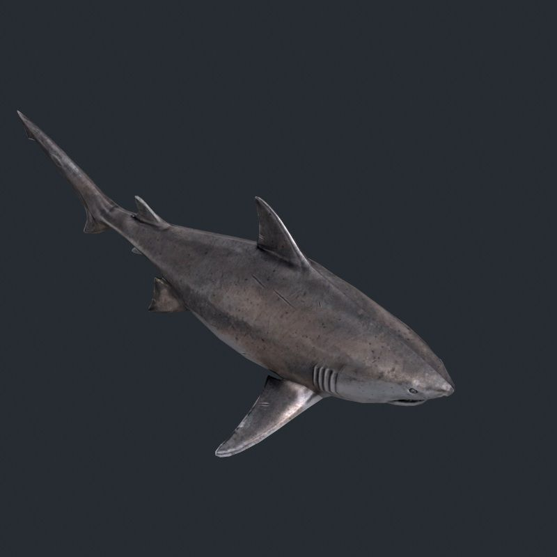 Shark fish 3d model game ready max obj fbx for Shark fishing games