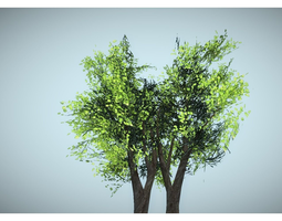 3D fresh tree