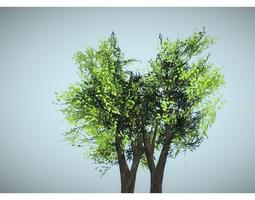 fresh tree 3D Model