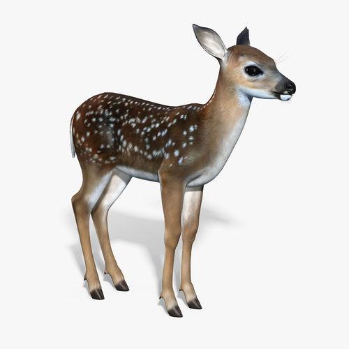 Fawn Baby Deer3D model