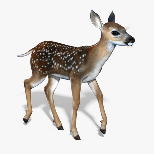 Fawn Baby Deer RIGGED3D model