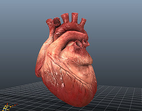 3D model HUMAN HEARTS Animated