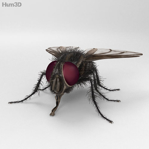 housefly high detailed 3d model max obj mtl 3ds fbx c4d lwo lw lws 1
