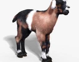 Baby Goat FUR 3D Model