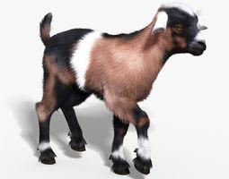 Baby Goat FUR RIGGED 3D Model