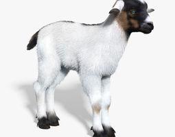 Baby Goat White FUR 3D Model