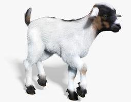 Baby Goat White FUR RIGGED 3D Model