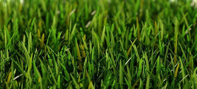 grass short a 3d model max obj fbx mtl 1