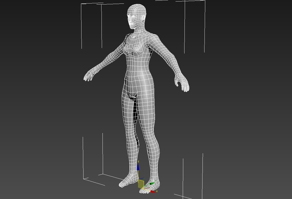 3D model Female Anatomy basemesh | CGTrader
