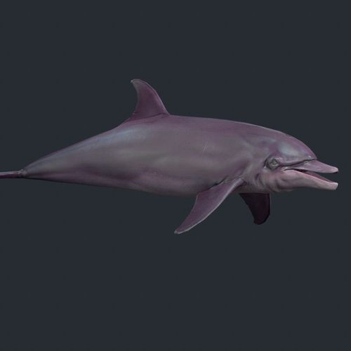 Dolphin 43D model