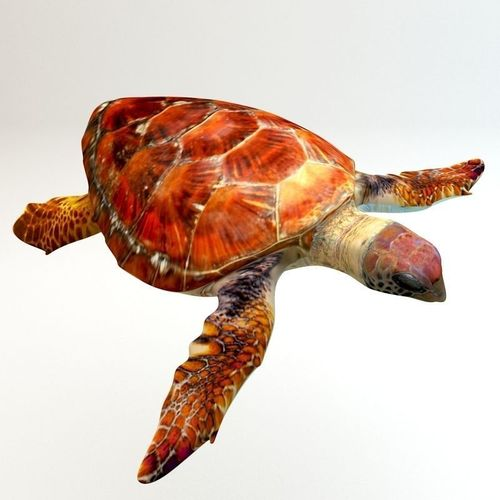 Loggerhead sea turtle3D model