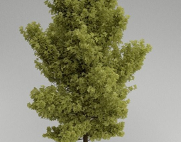 Tree - realistic 3D