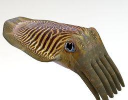 3D Cuttlefish 2