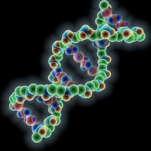 labeled spider diagram 3d dna molecule cgtrader