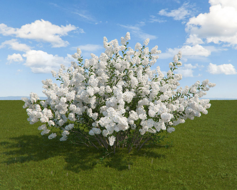 3d model serviceberry cgtrader serviceberry 3d model max 1 thecheapjerseys Image collections