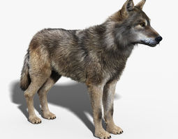 Gray Wolf FUR 3D Model