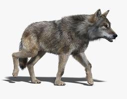 Gray Wolf FUR RIGGED 3D Model