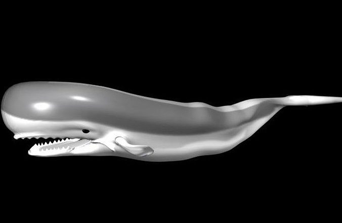 3d whale model 3d model rigged animated ma mb 1