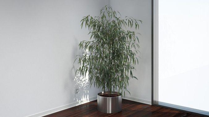 VP Oleander3D model
