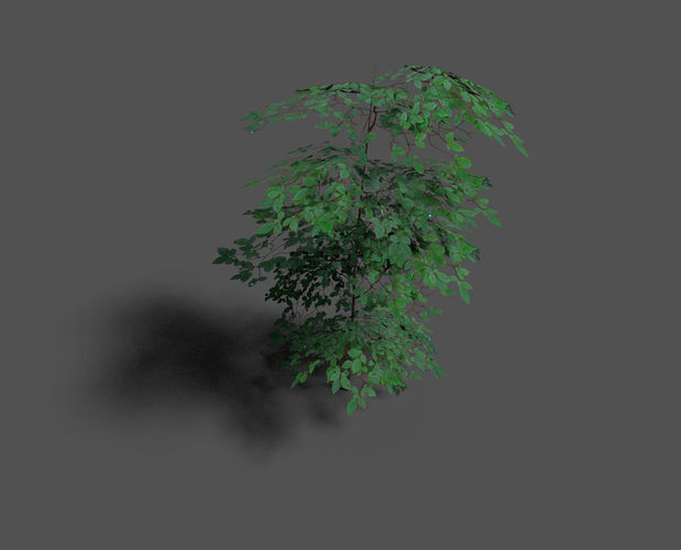 low poly forest tree 13D model