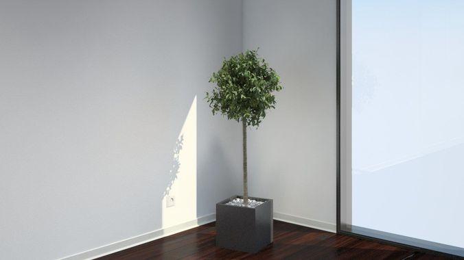 VP Bay Laurel Tree3D model