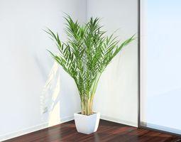 VP Areca Palm 3D model
