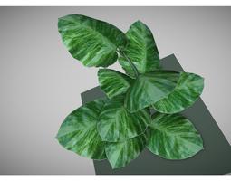 low poly pot plant 3D Model