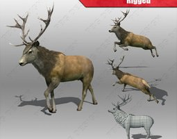 3d model rigged stag deer realtime
