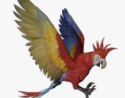 Parrot 3D Model