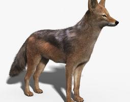 Jackal FUR 3D Model