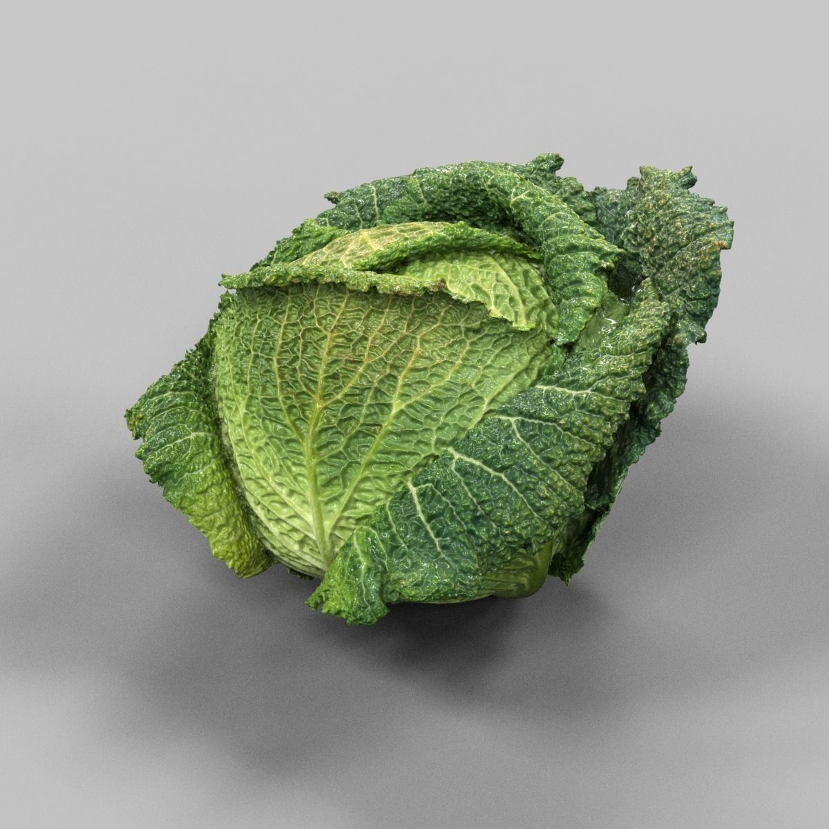 Savoy Cabbage 3D Model Game ready .obj - CGTrader.com