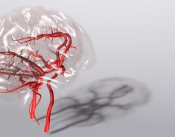 Blood Supply Of Brain - Circle of Willis 3d Model HD 3D Model