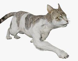 House Cat 3D Model