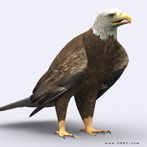 3DRT - Eagle3D model