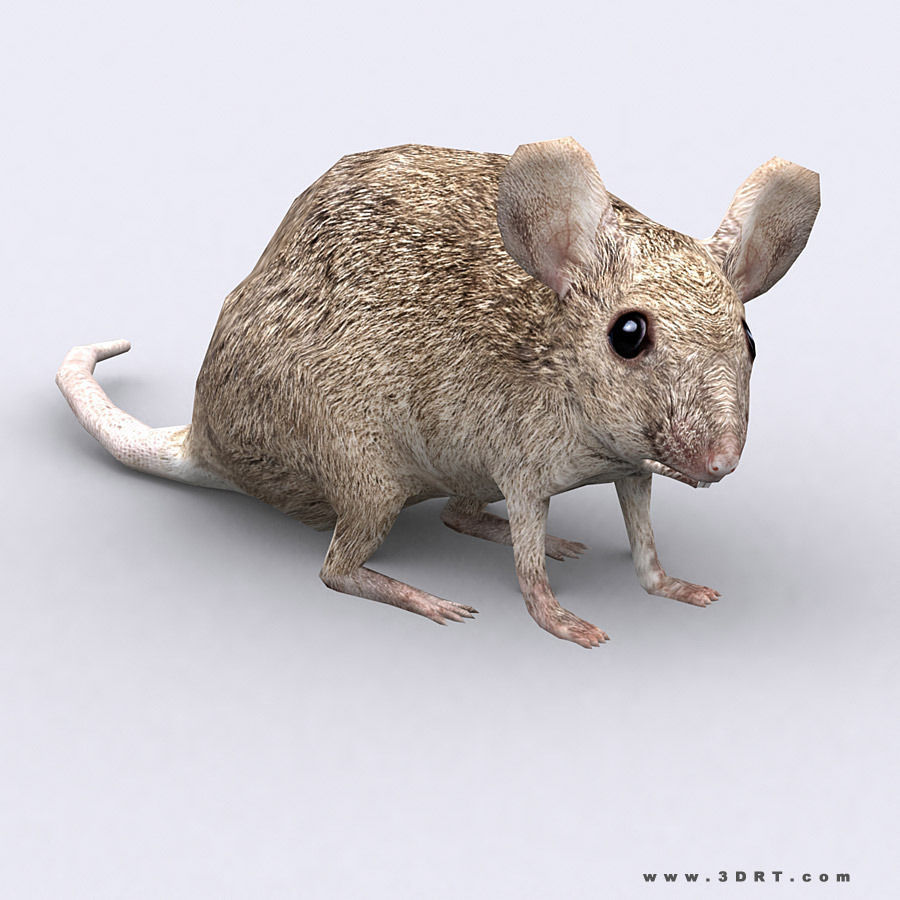 Mouse 3D Model Game Ready Animated Rigged