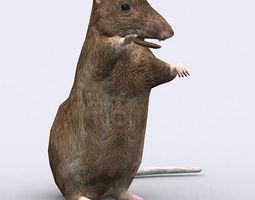 3DRT - Rat 3D Model
