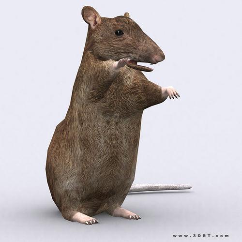 3DRT - Rat3D model