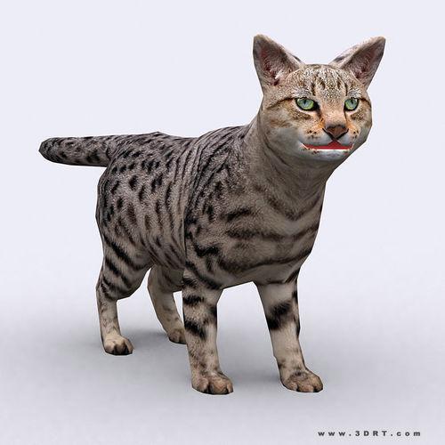 3DRT - Cat3D model